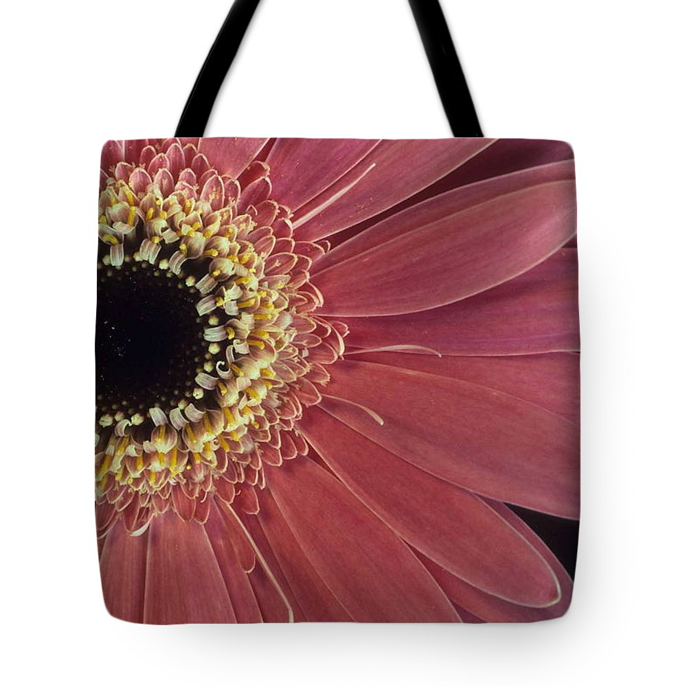Salmon Gerber Daisy Tote Bag featuring the photograph Salmon Gerber Daisy by Laurie Paci