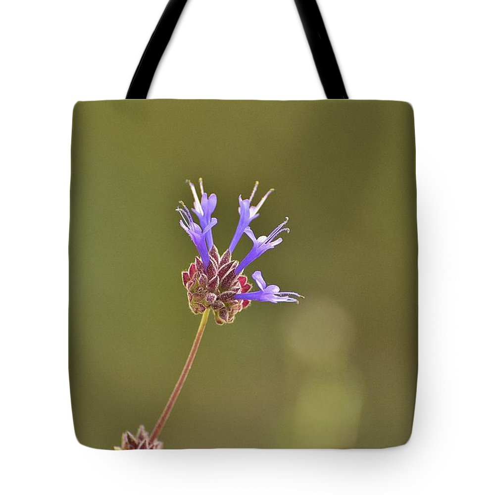 Linda Brody Tote Bag featuring the photograph Salvia Clevelandii II by Linda Brody