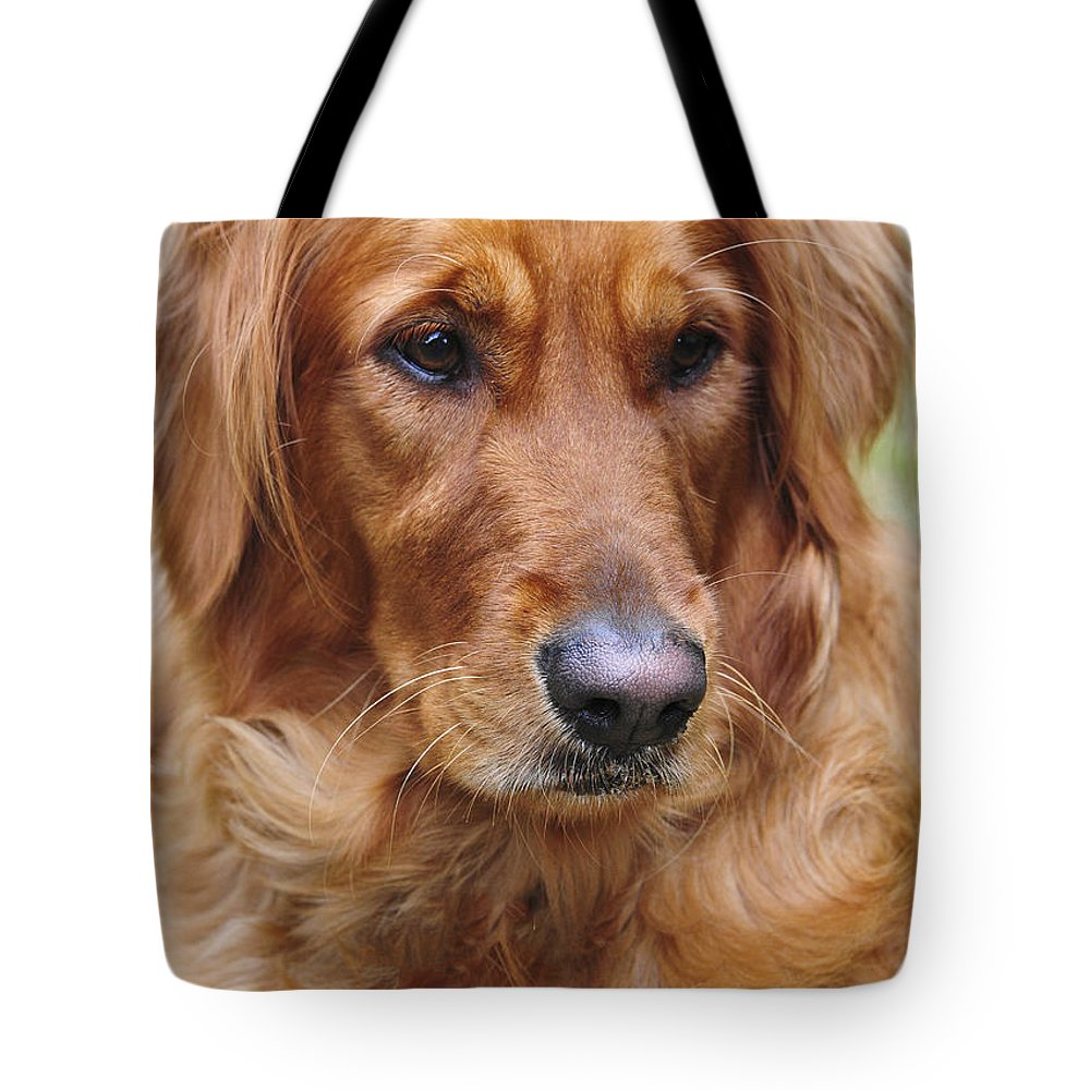 Dog Tote Bag featuring the photograph Sam by Stephen Anderson