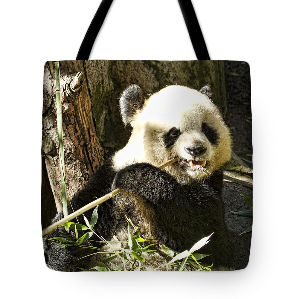 Panda Bear Tote Bag featuring the photograph San Diego Panda by Sissy Schneiderman