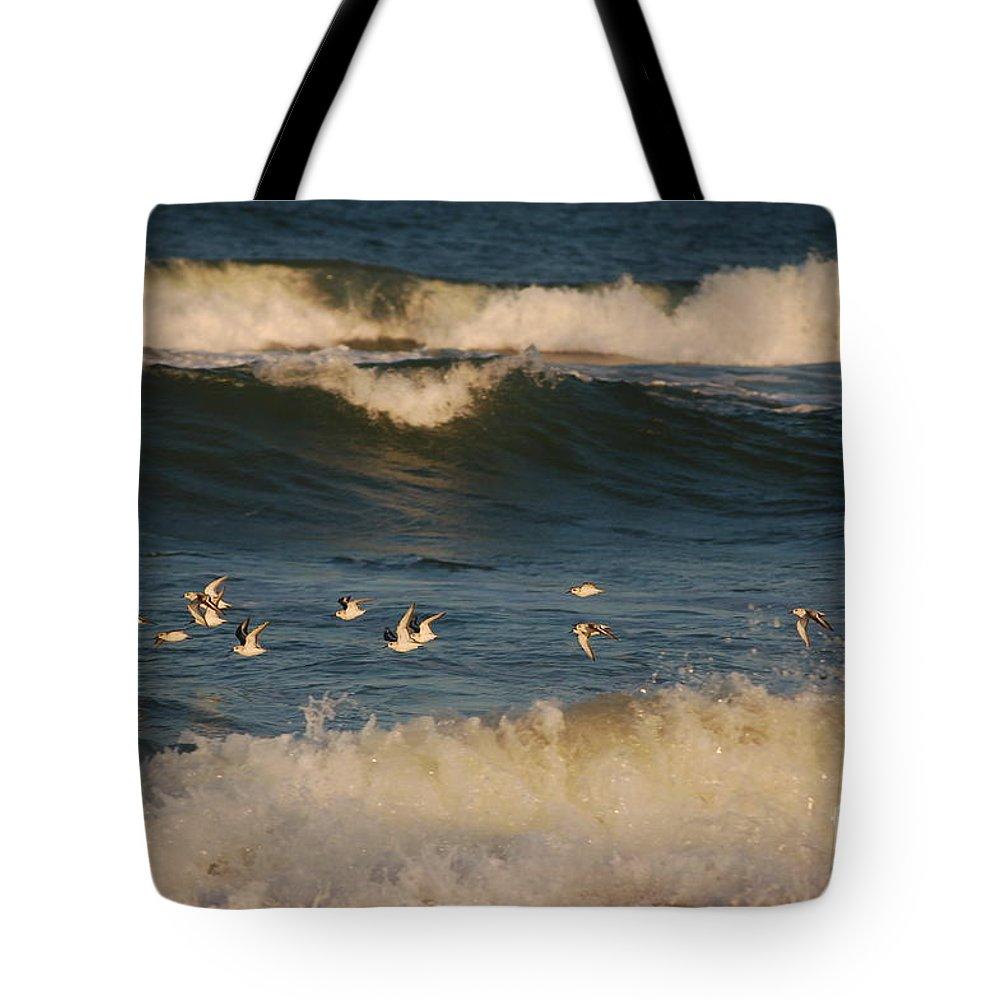 Sanderlings Tote Bag featuring the photograph Sanderlings In Flight by Don Wilhour