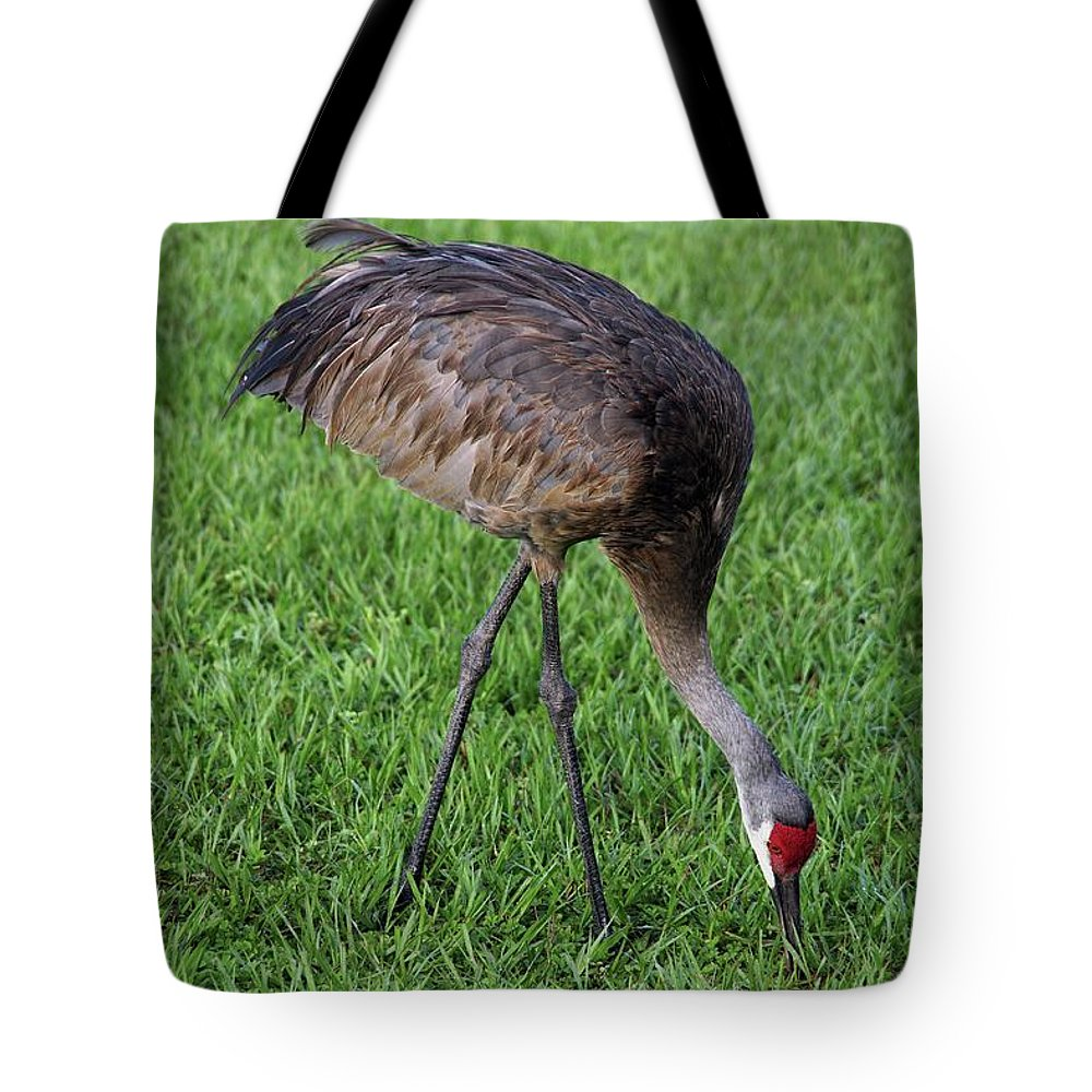 Nature Tote Bag featuring the photograph Sandhill Crane II by Richard Rizzo
