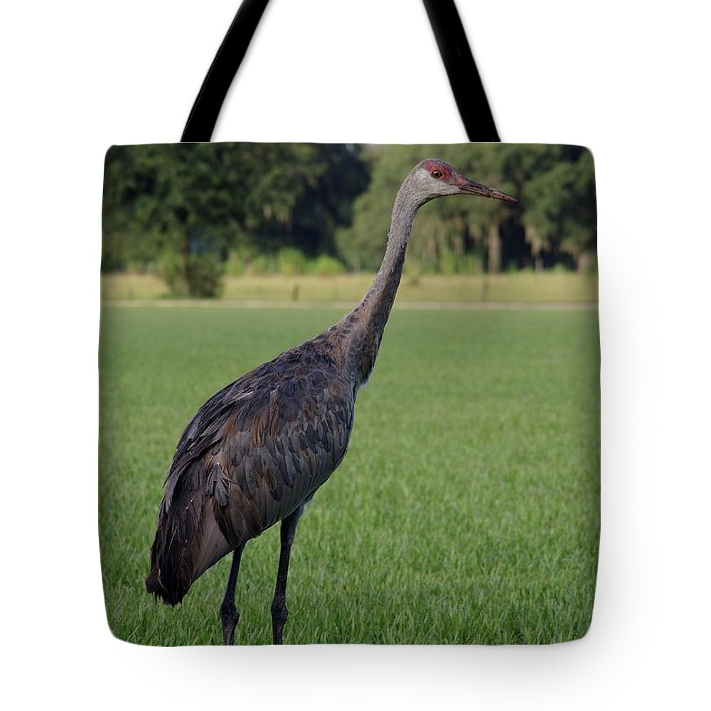 Nature Tote Bag featuring the photograph Sandhill Crane by Richard Rizzo