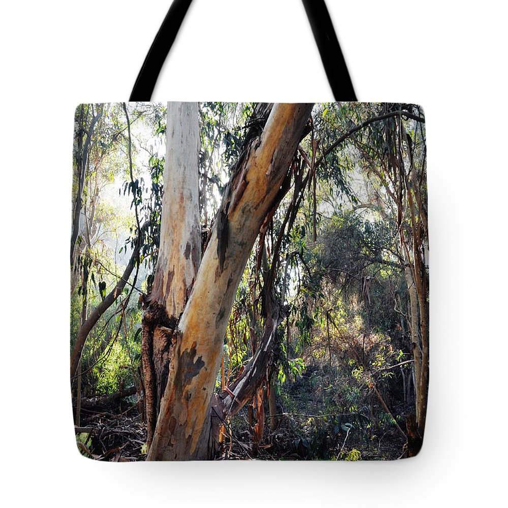Santa Barbara Tote Bag featuring the photograph Santa Barbara Eucalyptus Forest by Kyle Hanson