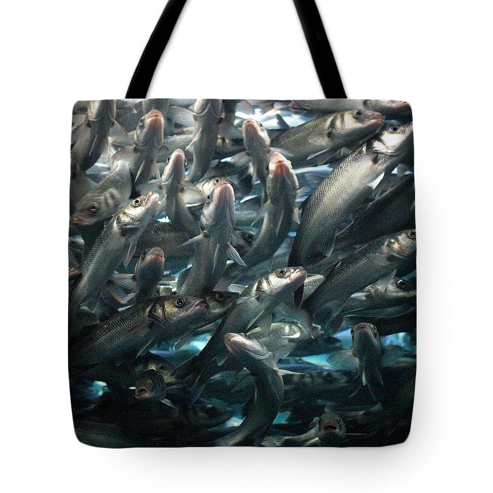 Loro Park Tote Bag featuring the photograph Sardines 2 by Jouko Lehto
