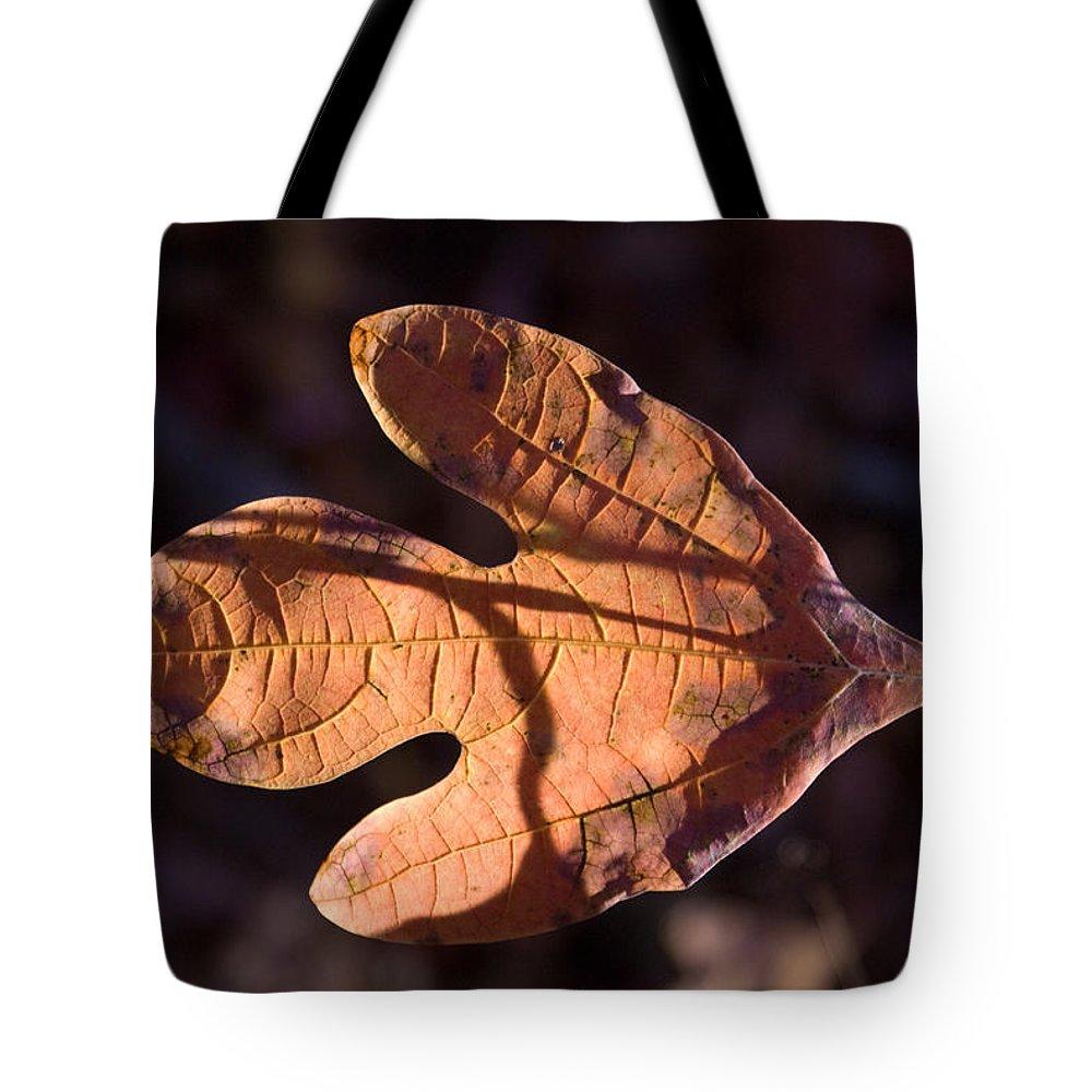 Sassafras Tote Bag featuring the photograph Sassafras Leaf In Evening Sun by Douglas Barnett