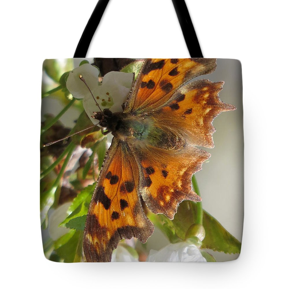 Comma Tote Bag featuring the photograph Satyr Comma by Frank Townsley