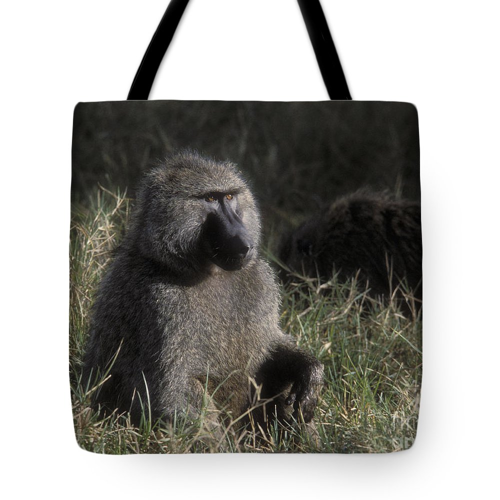 Baboon Tote Bag featuring the photograph Savannah Olive Baboon by Sandra Bronstein