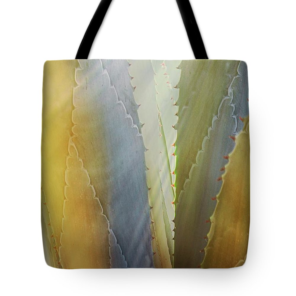 Nature Tote Bag featuring the photograph Sawtooth Agave Gold Light by Zayne Diamond Photographic