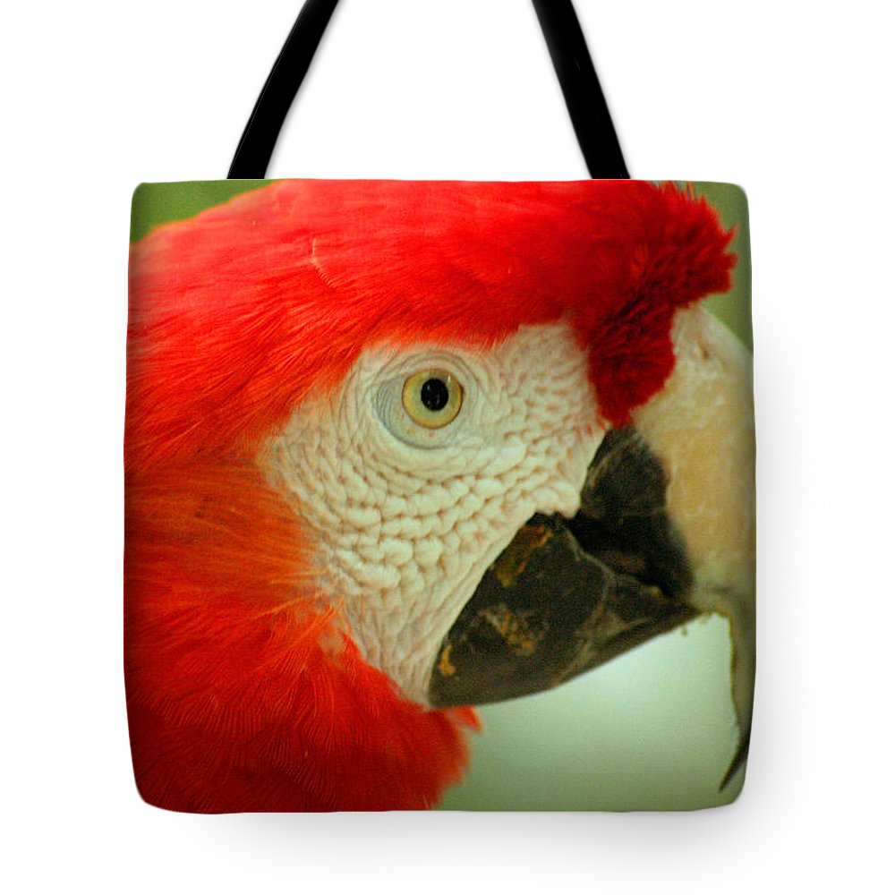 Parrot Tote Bag featuring the photograph Scarlett Macaw South America by Ralph A Ledergerber-Photography