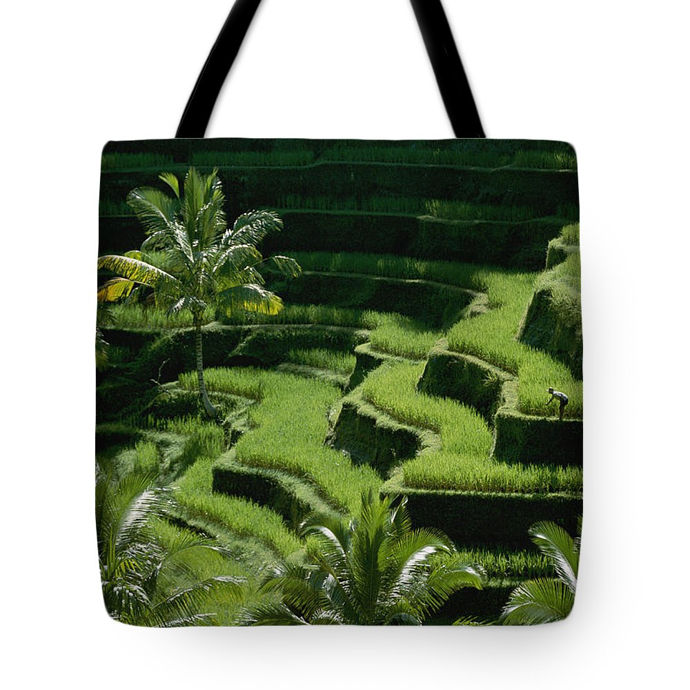 Bali Tote Bag featuring the photograph Scenic Valleys With Rice Fields In Bali by Paul Chesley