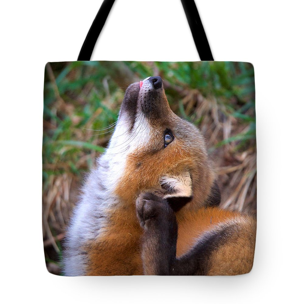 Red Fox Kit Tote Bag featuring the photograph Scratchin With Distraction by Heather Quinn