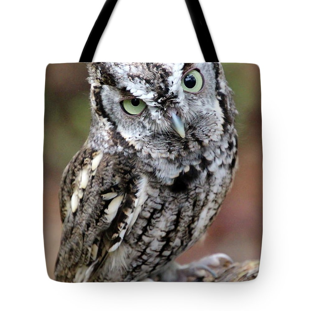 Owl Tote Bag featuring the photograph Screech Owl 3 by Danielle Gareau