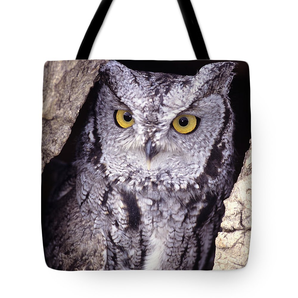 Animal Art Tote Bag featuring the photograph Screech Owl by John Hyde - Printscapes