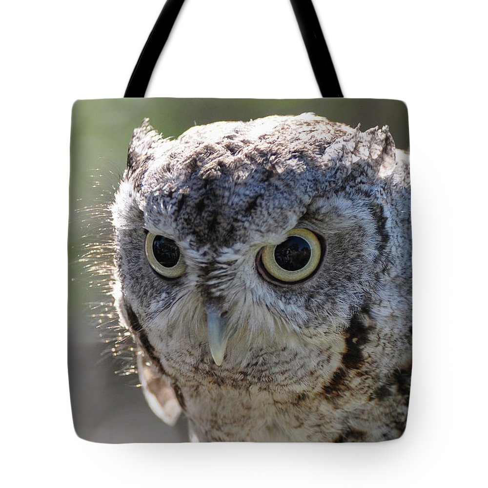 Animal Tote Bag featuring the photograph Screechowl Focused On Prey by Tim Kathka