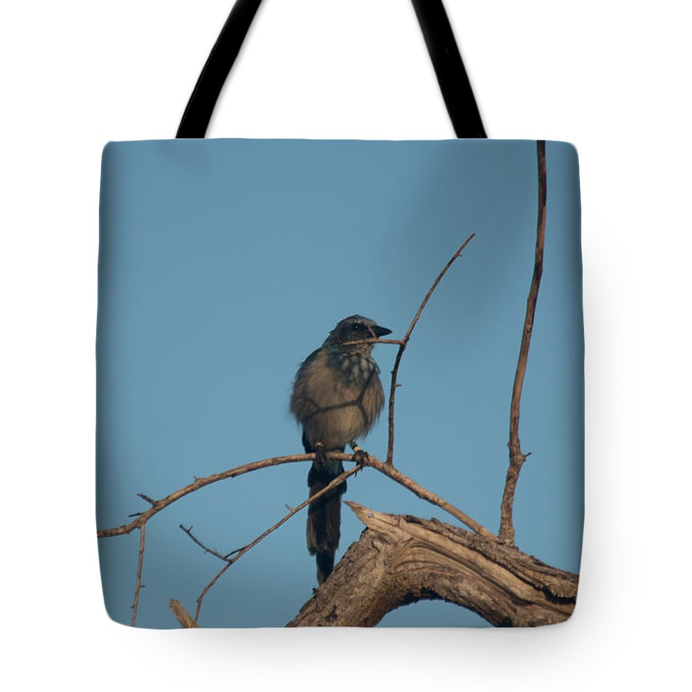 Florida Scrub Jay Tote Bag featuring the photograph Scrub Jay Private Eye by JR Cox