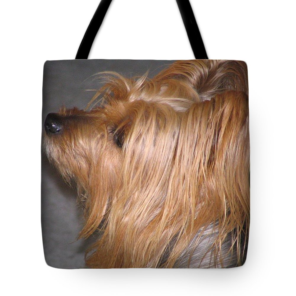 Dogs Tote Bag featuring the photograph Scruffy by Peggy Holcroft