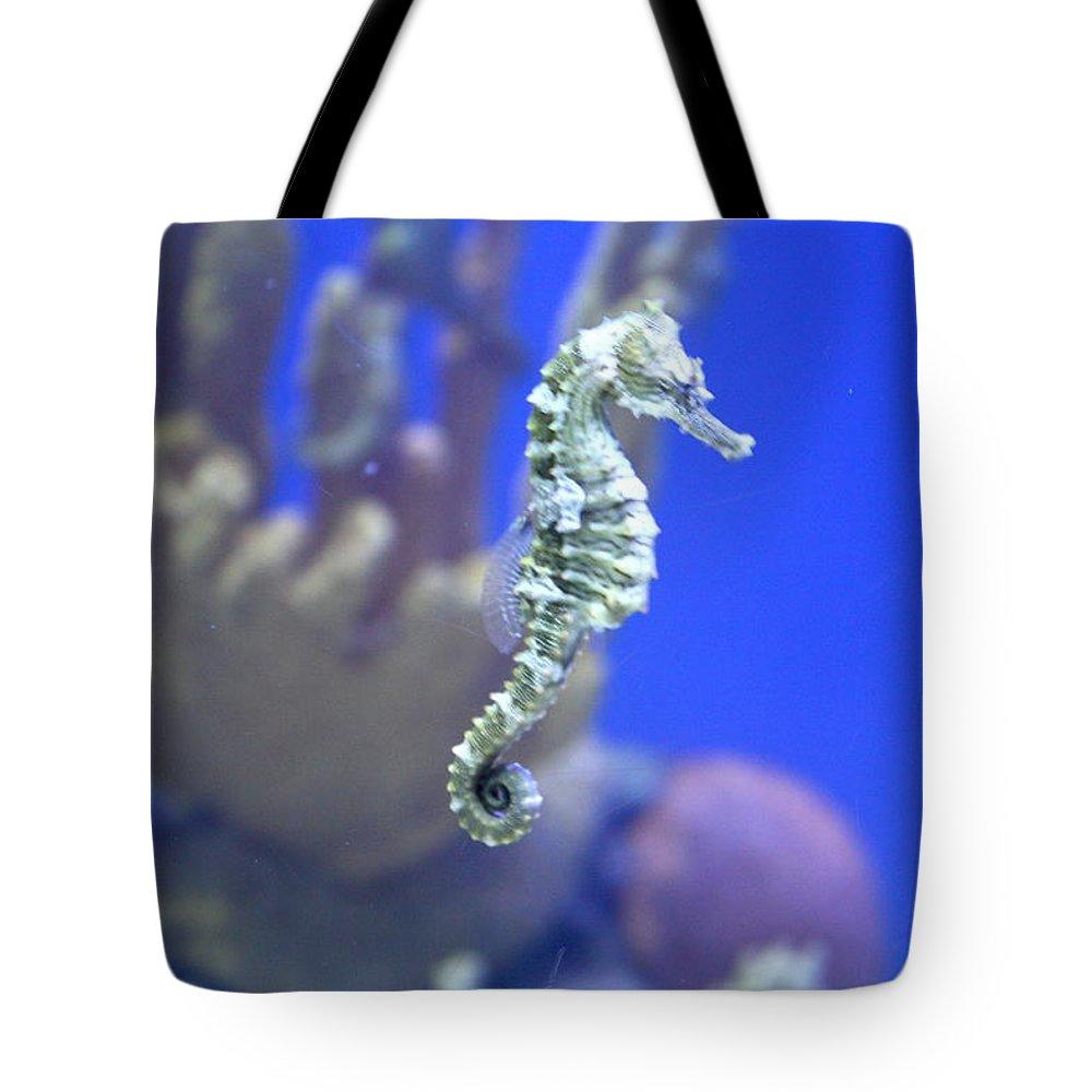 Tote Bag featuring the photograph Sea Horse by Teresa Doran