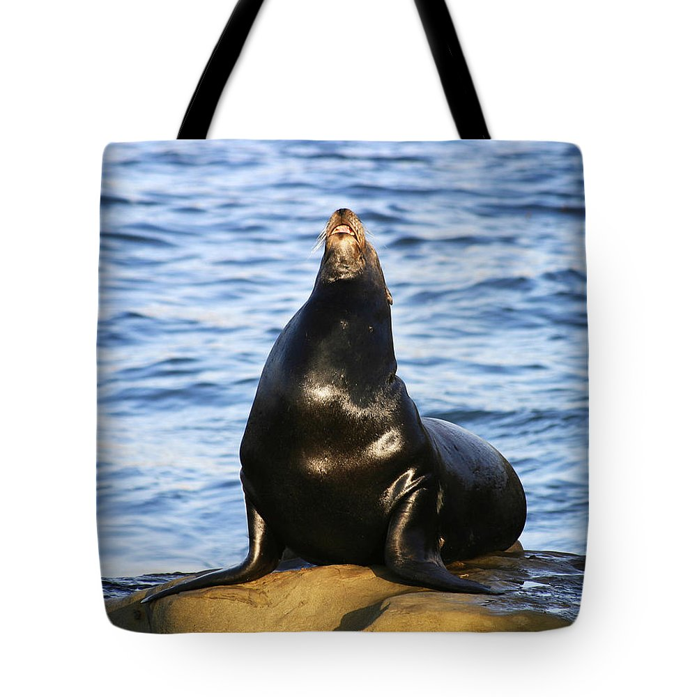 Sea Lion Tote Bag featuring the photograph Sea Lion Sing by Anthony Jones
