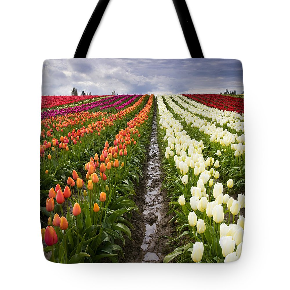 Tulips Tote Bag featuring the photograph Sea Of Color by Mike Dawson