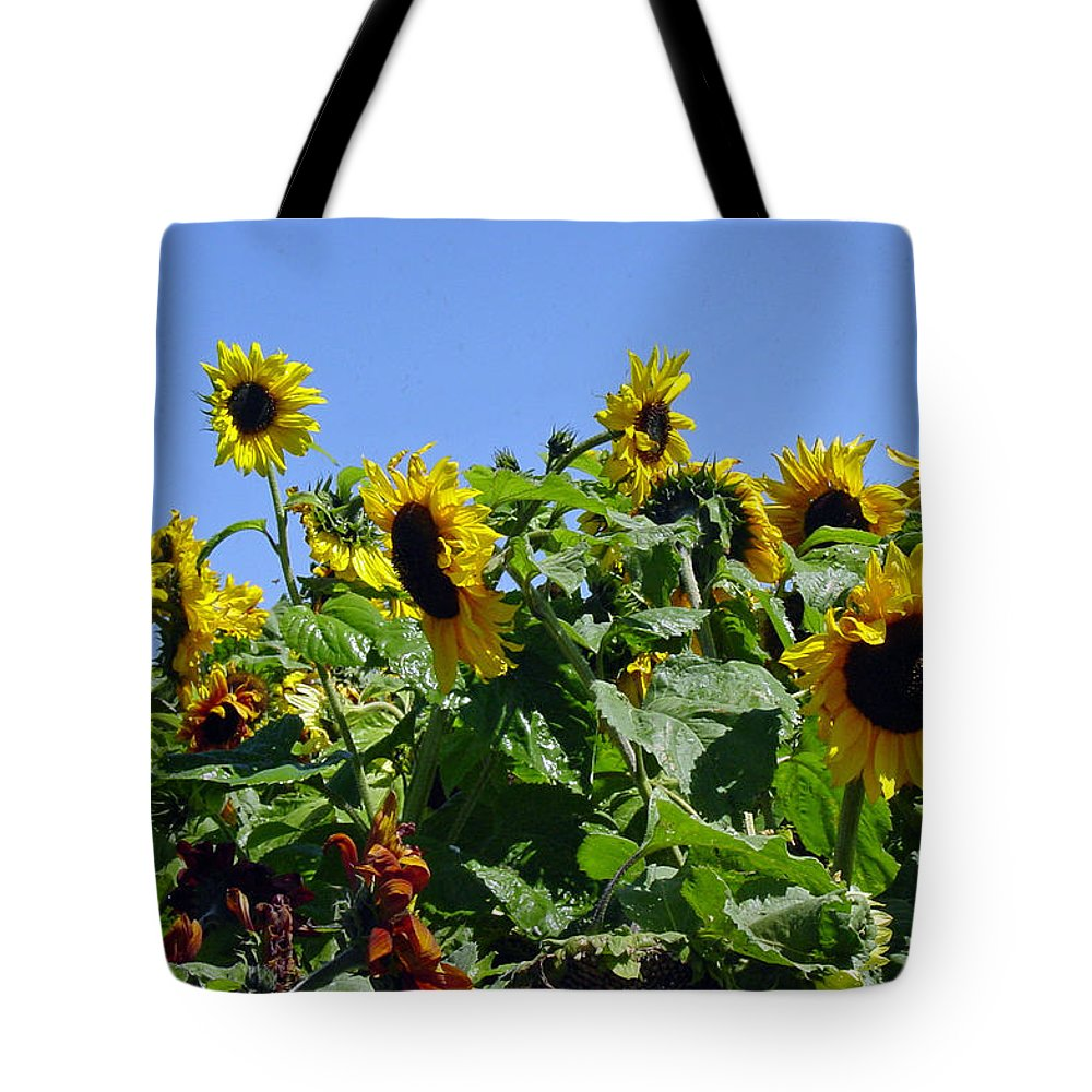 Sunflower Tote Bag featuring the photograph Sea Of Sunshine by Suzanne Gaff