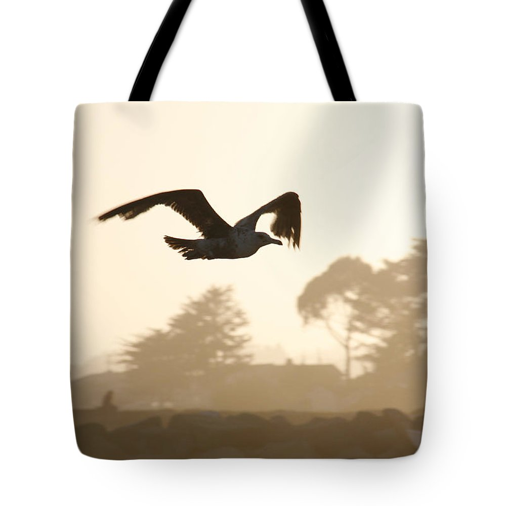 Bird Tote Bag featuring the photograph Seagull Sihlouette by Marilyn Hunt