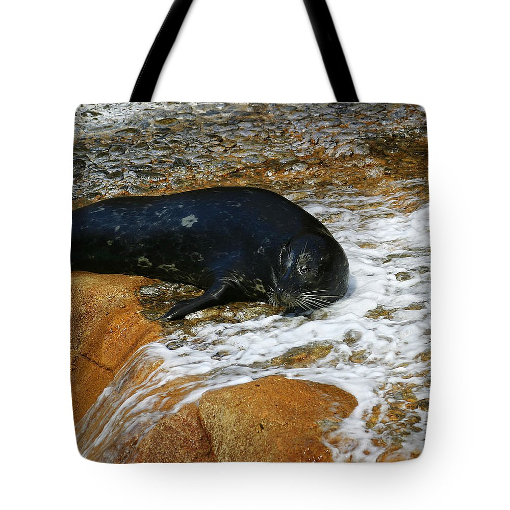 Seal Tote Bag featuring the photograph Seal by Anthony Jones