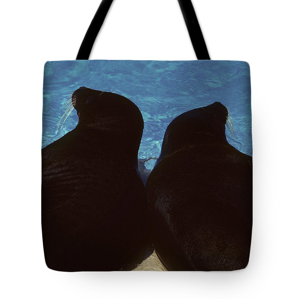 Seals Tote Bag featuring the photograph Sealed by Steve Williams