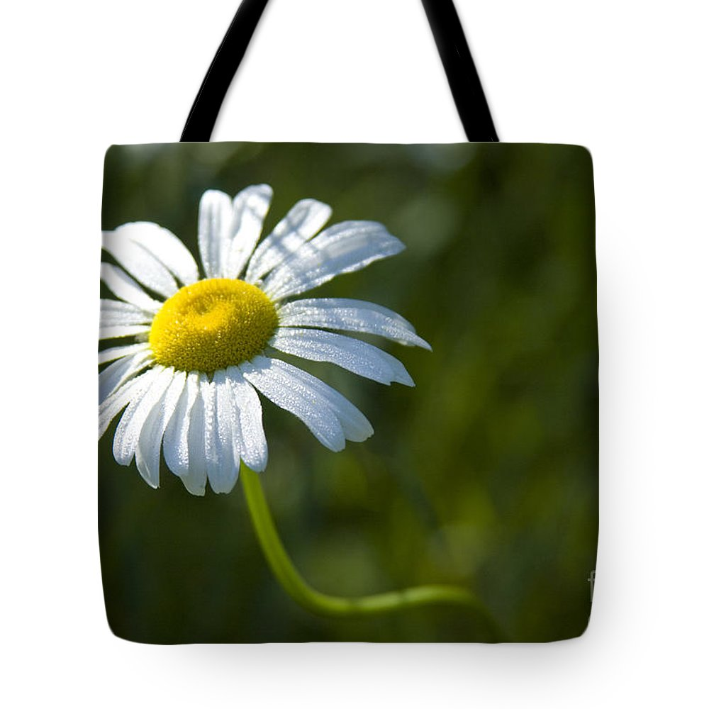 Daisy Tote Bag featuring the photograph Searching For Sunlight by Idaho Scenic Images Linda Lantzy
