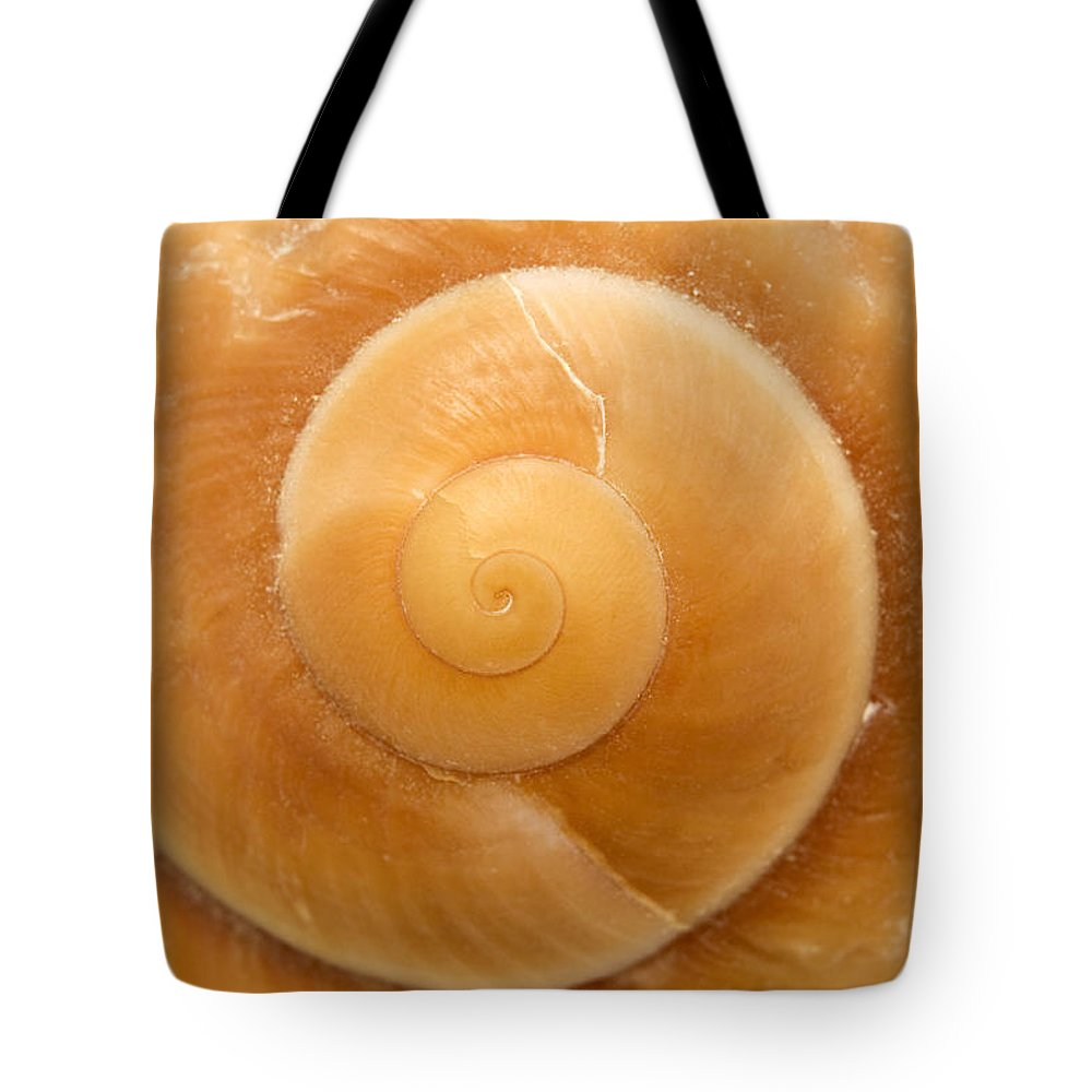 Macro Tote Bag featuring the photograph Seashell by Fabrizio Troiani