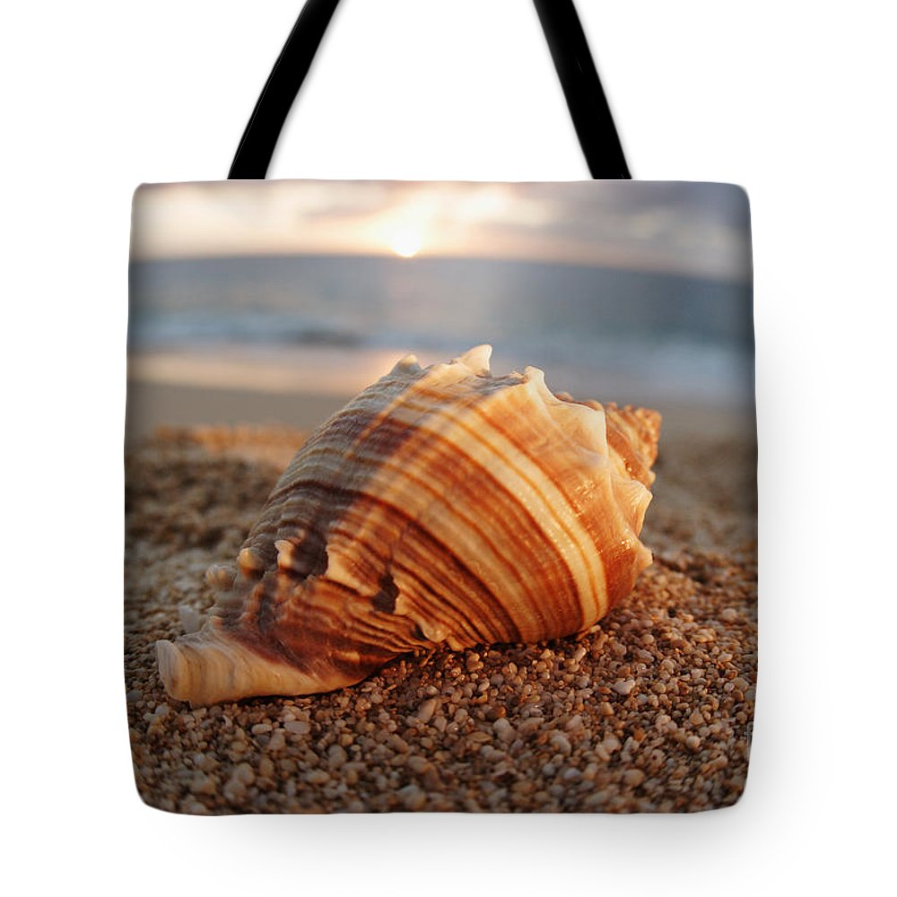 Background Tote Bag featuring the photograph Seashell In The Sand by Vince Cavataio - Printscapes