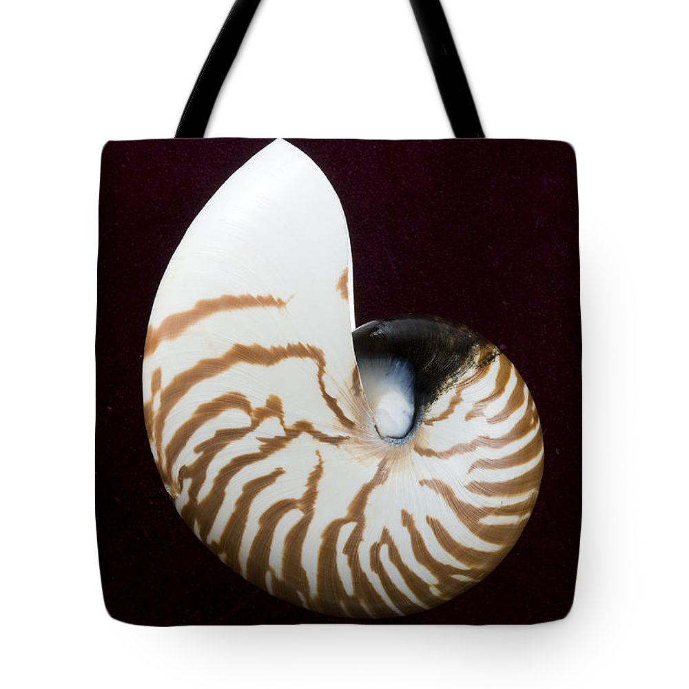 Beach Art Tote Bag featuring the photograph Seashell On Black Background by Bill Brennan - Printscapes
