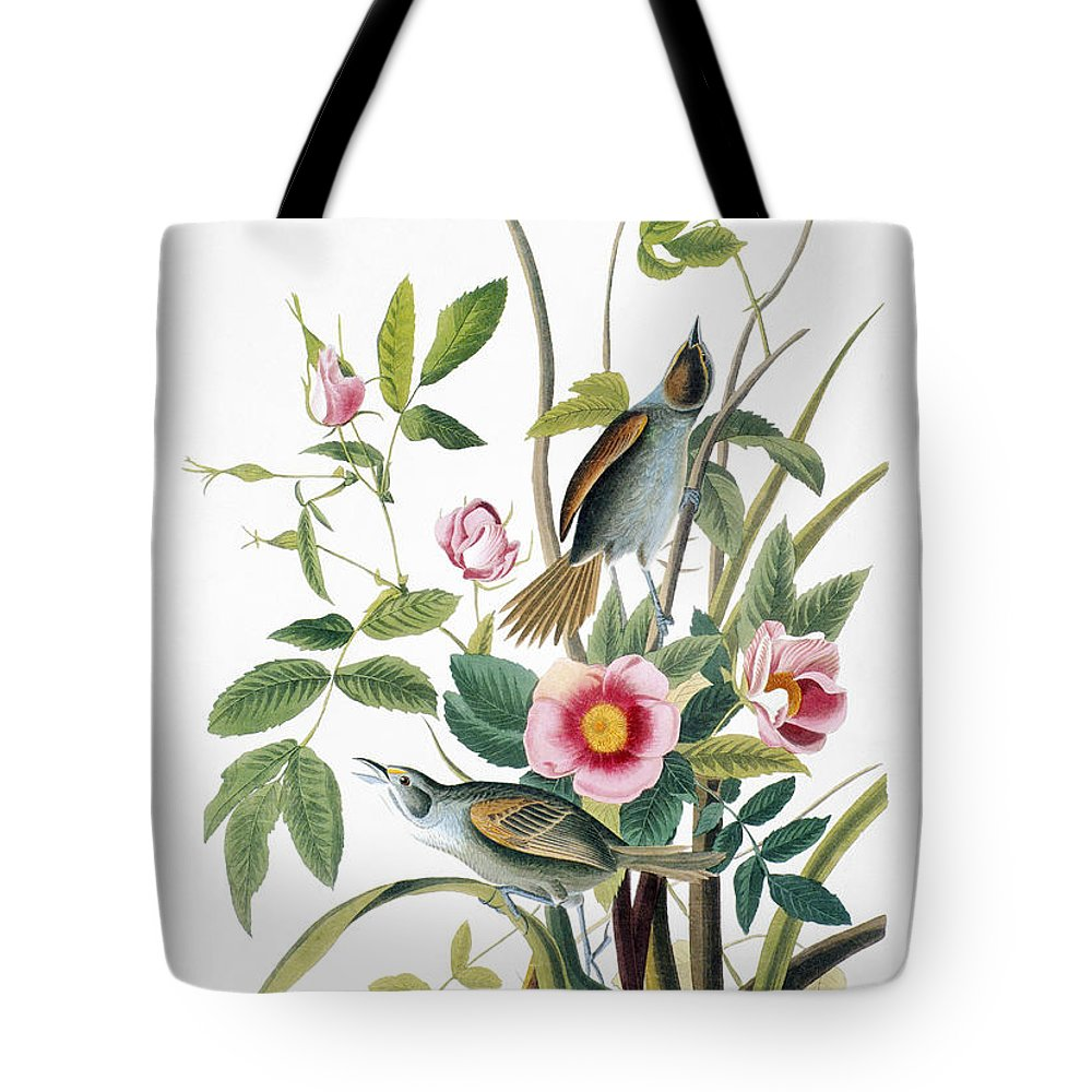 1858 Tote Bag featuring the photograph Seaside Sparrow, 1858 by Granger