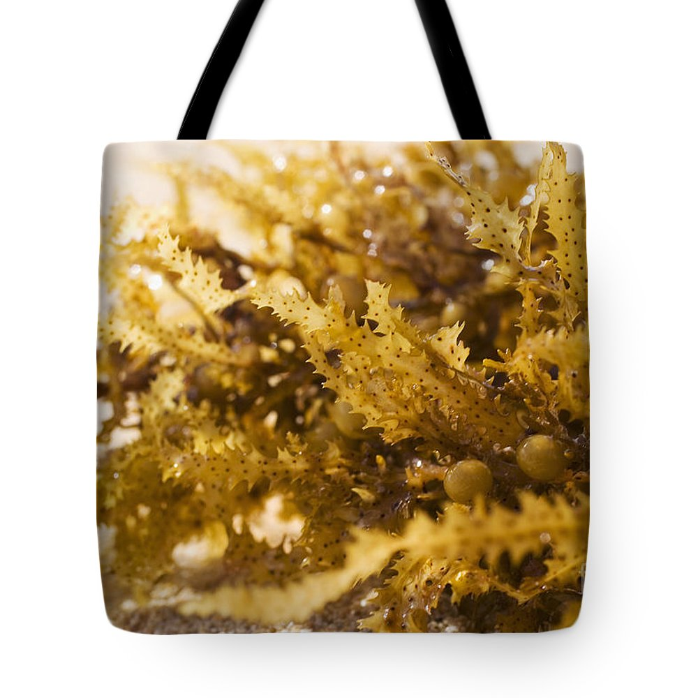 Afternoon Tote Bag featuring the photograph Seaweed In The Sand by Tomas del Amo - Printscapes