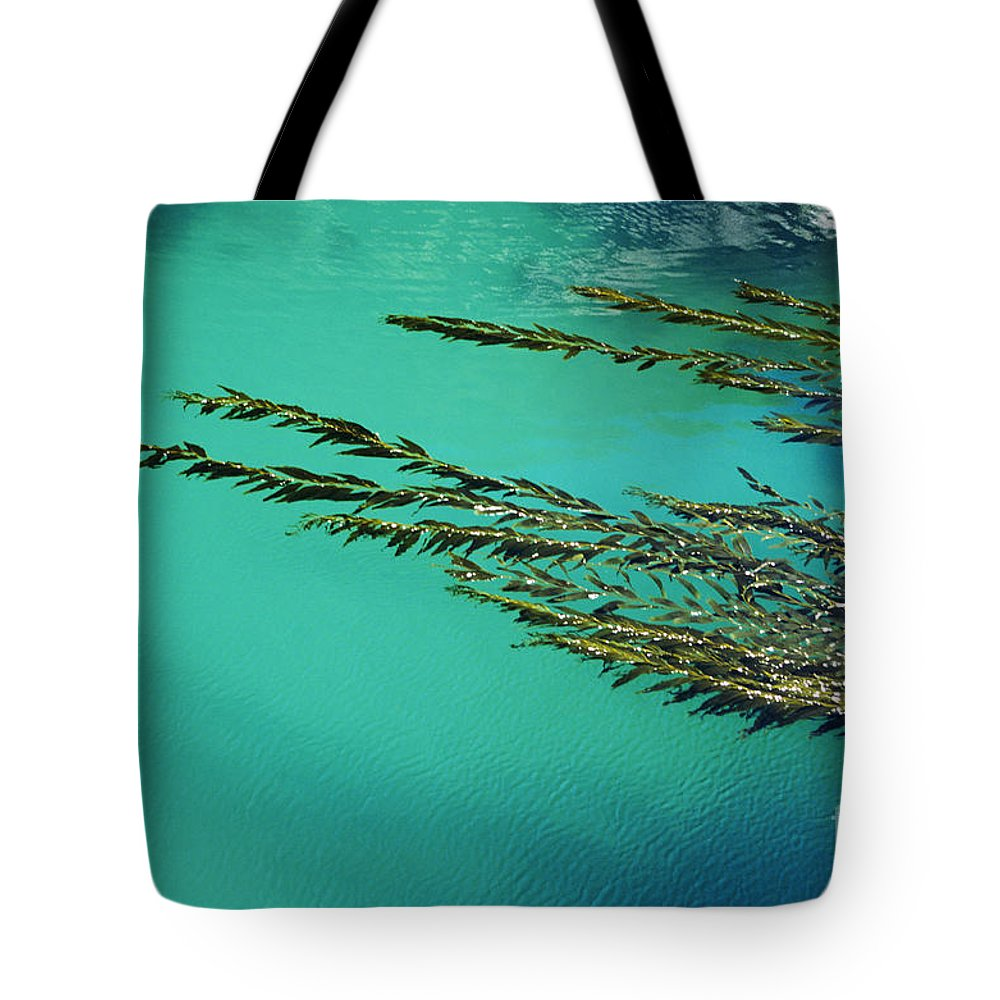 Abstract Tote Bag featuring the photograph Seaweed Patterns by Larry Dale Gordon - Printscapes