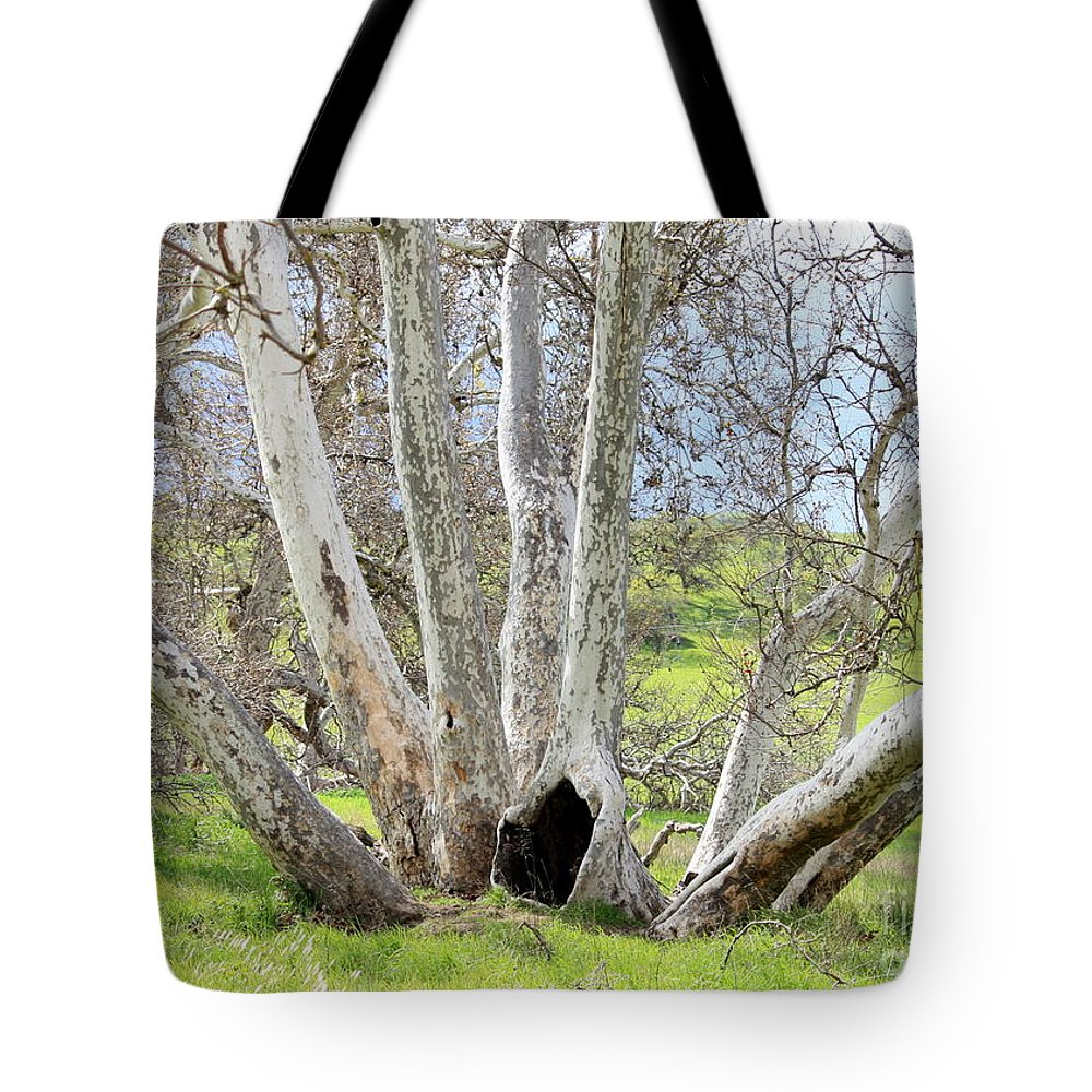 Tree Tote Bag featuring the photograph Secret Passageway by Carol Groenen
