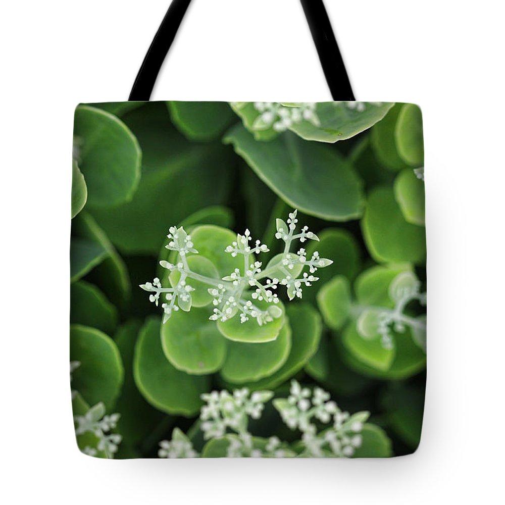 Sedum Plant Green Photography Photograph White Tote Bag featuring the photograph Sedum Pre-bloom by Shari Jardina