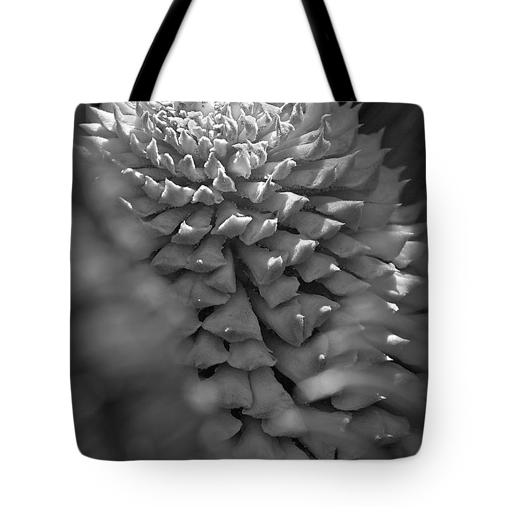 Palm Tote Bag featuring the photograph Seed Pod Black And White by Phyllis Denton