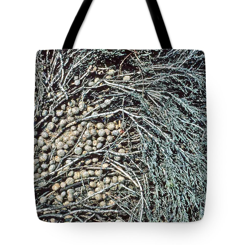 Seeds Tote Bag featuring the photograph Seeds Of The Sea by Laurie Paci