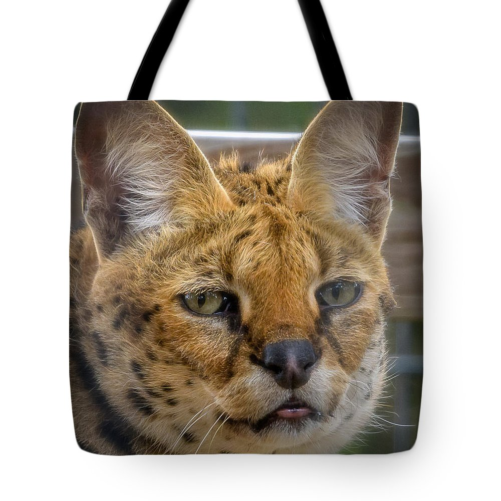 Fine Art Tote Bag featuring the photograph Serval Cat by David Pine
