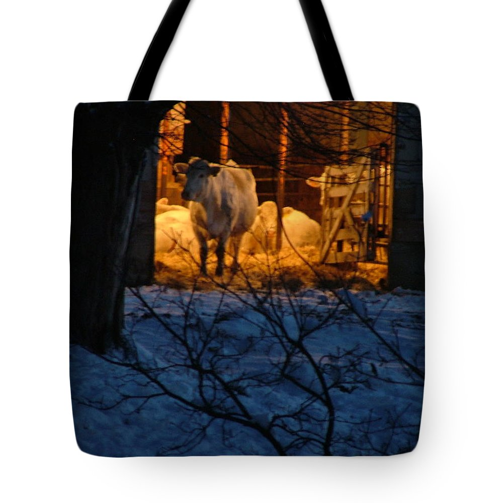 Charolaise Cattle Tote Bag featuring the photograph Setting Up With The Girls by Larry Campbell