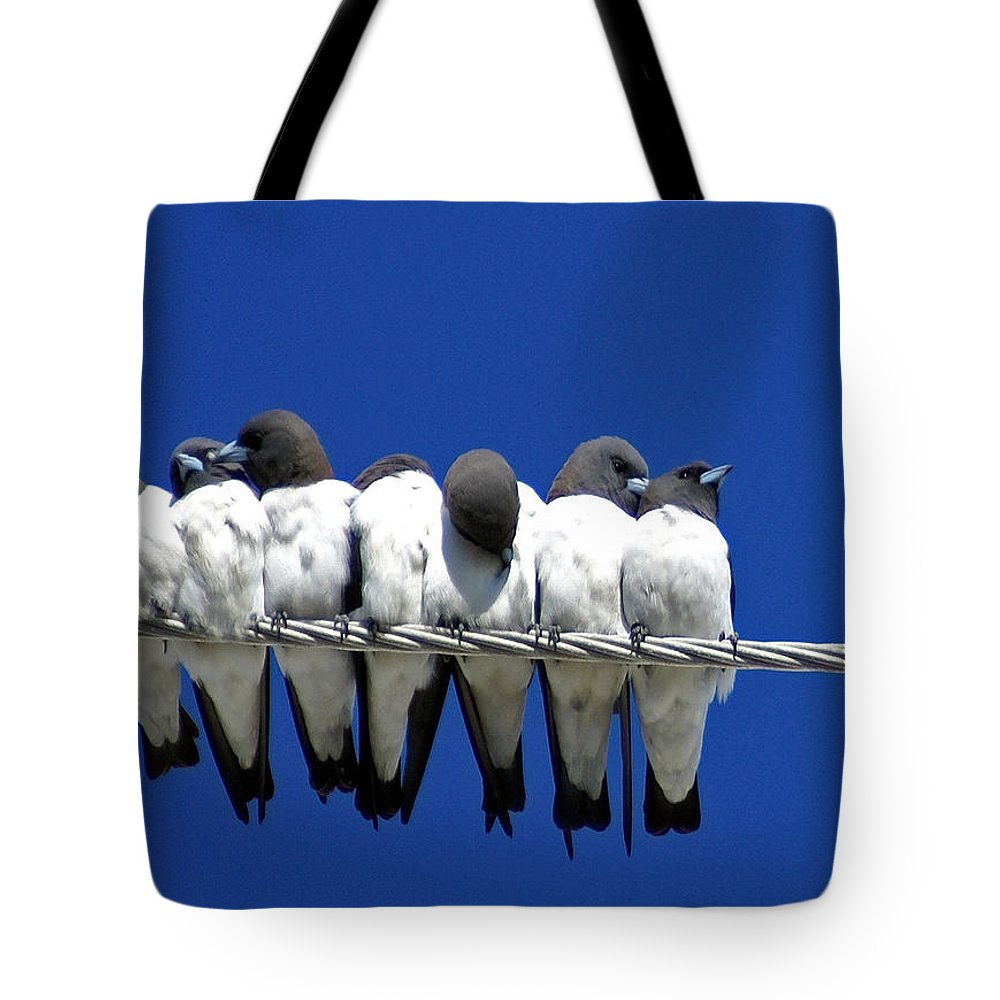 Animals Tote Bag featuring the photograph Seven Swallows Sitting by Holly Kempe