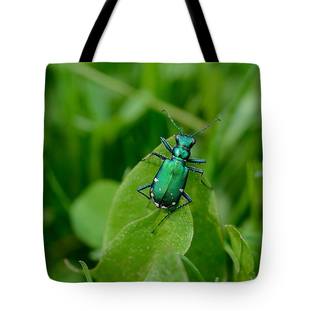 Insect Tote Bag featuring the photograph Shades Of Green by Janet Rockburn