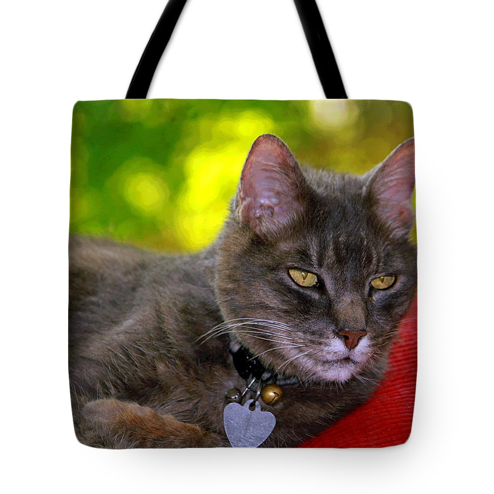 Kitty Tote Bag featuring the photograph Shadow's Glamour Shot by Suzanne Gaff