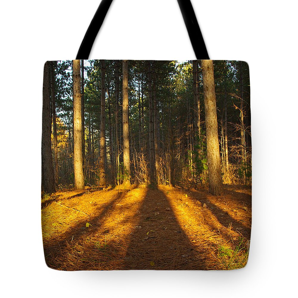 Trees Tote Bag featuring the photograph Shadows In Forrest by Zalman Latzkovich