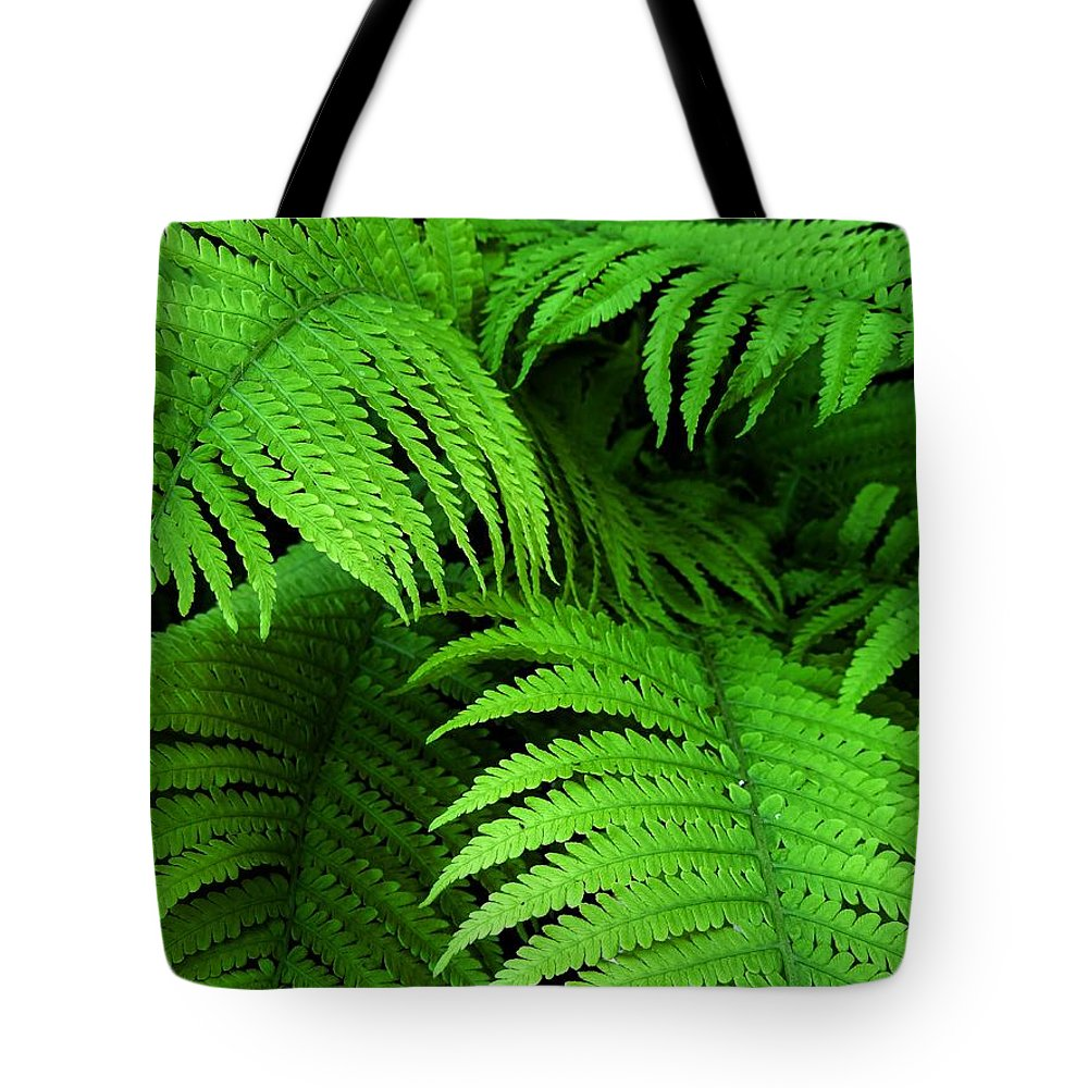 Ferns Tote Bag featuring the photograph Shadowy Fern by Jennie Perry