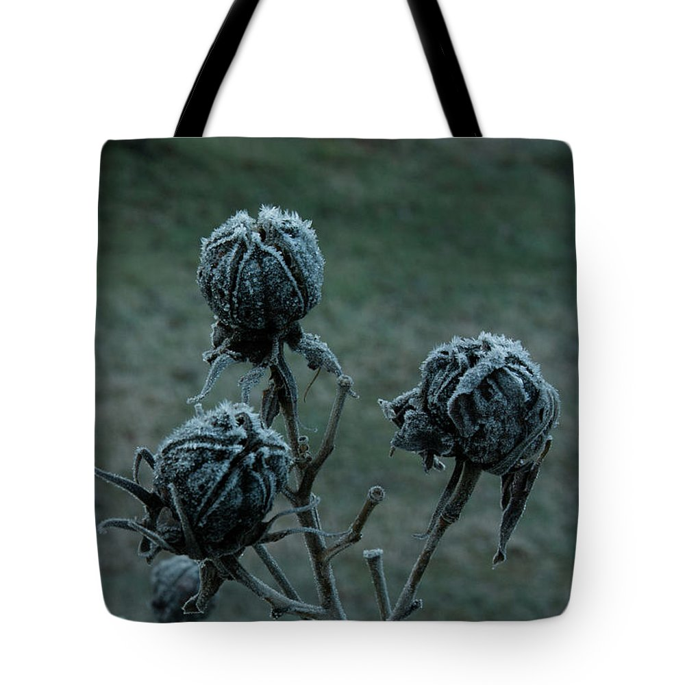 Morgan Tote Bag featuring the photograph Shadowy Frozen Pods From The Darkside by Douglas Barnett