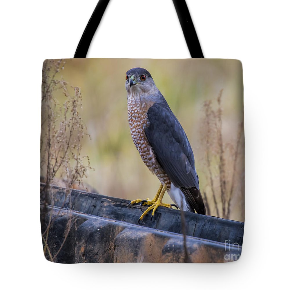 Coopers Hawk Tote Bag featuring the photograph Shakerag Coopers Hawk by Barbara Bowen