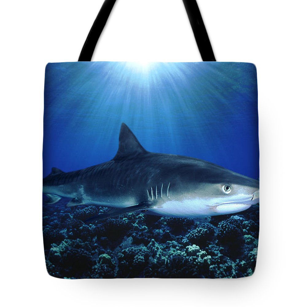 Body Tote Bag featuring the photograph Shark In The Dark by Dave Fleetham - Printscapes