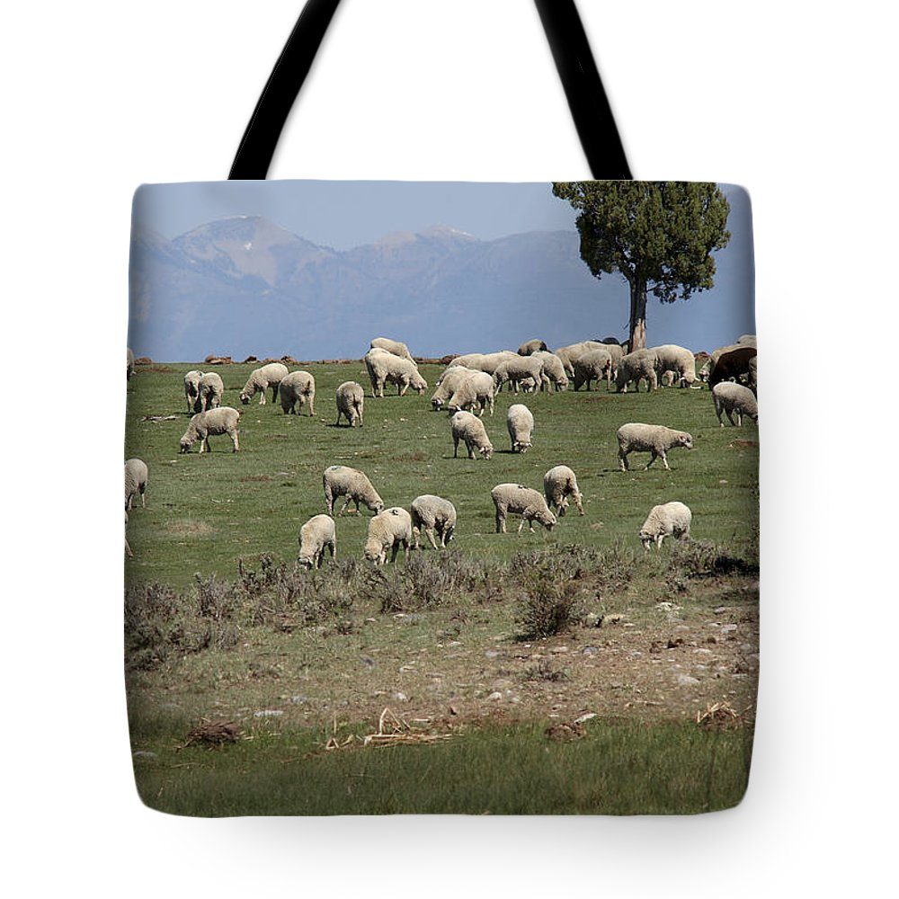Sheep Tote Bag featuring the photograph Sheep Country by Jerry McElroy